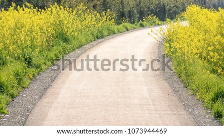Yellow flowers blossoming beside a walking path #1073944469