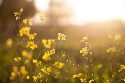 Yellow flowers by the sun