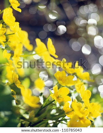Yellow flowers, close-up