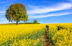 Yellow flowers field path summer nature landscape