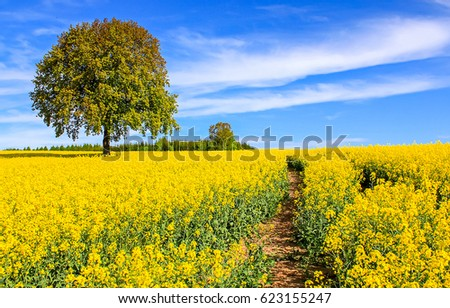 Stock Photo Yellow flowers field path summer nature landscape. Summer field scenery landscape