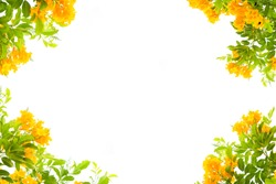 Yellow flowers Floral frame, isolated on withe background , Yellow flower frame.