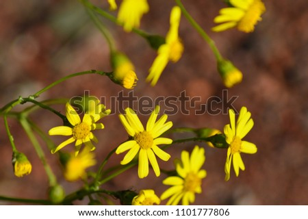 yellow flowers gelbe Blume #1101777806