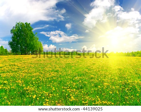 Yellow flowers hill under blue cloudy sky - Shutterstock ID 44139025