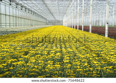 Yellow flowers in a greenhouse indoors.
