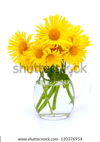 yellow flowers in a pitcher isolated on white background