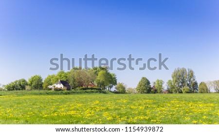 Yellow flowers in front of small village Oostum in Groningen, Netherlands #1154939872