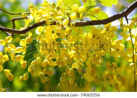 Yellow flowers in full bloom