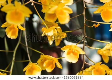 yellow flowers in garden #1360039664