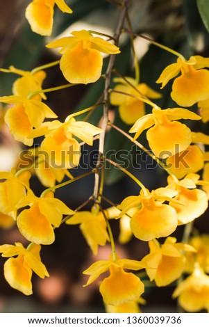 yellow flowers in garden #1360039736