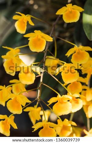 yellow flowers in garden #1360039739