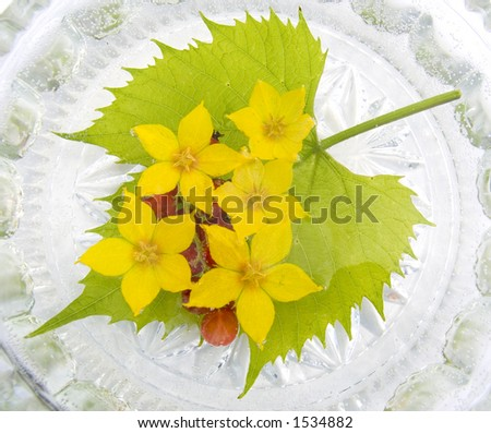 Yellow flowers in water and berries of a red currant on green to a leaf