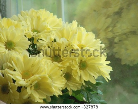 Yellow Flowers in the Window movie