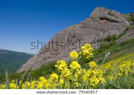 Yellow flowers on mountain background