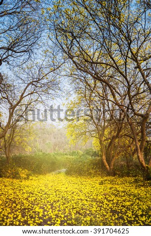 yellow flowers on the ground under the big trees in the forest. #391704625