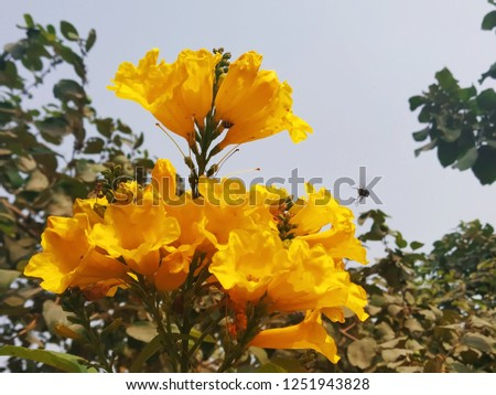 Yellow flowers pic very beautiful pic in nature