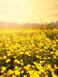Yellow Flowers Puerto Almanza Ushuaia Argentina