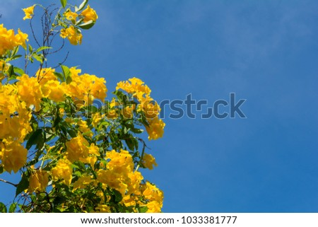 Yellow flowers with sky #1033381777