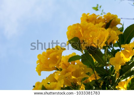 Yellow flowers with sky #1033381783