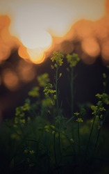 Yellow Flowers With Sunset Bokeh Background