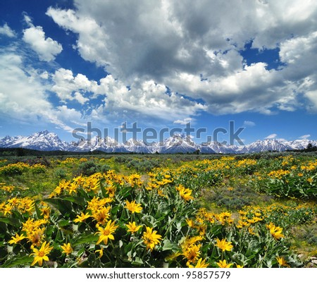 yellow flowers with the grand tetons in the background