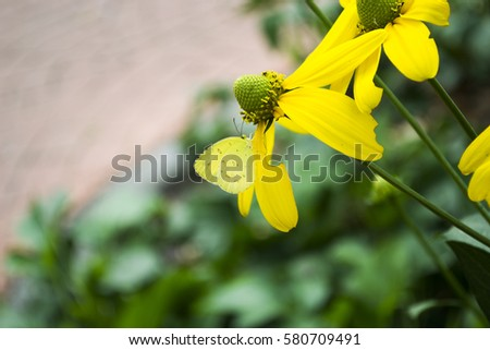 Yellow flowers with yellow butterflies, Yellow flowers , yellow butterflies #580709491