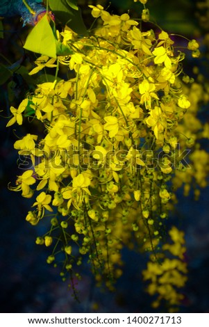 Yellow Flowers.Yellow flowersburst with happiness. They symbolize the bonds of friendship, the taste of success and pride. Joy is also one of the meanings of thisflower