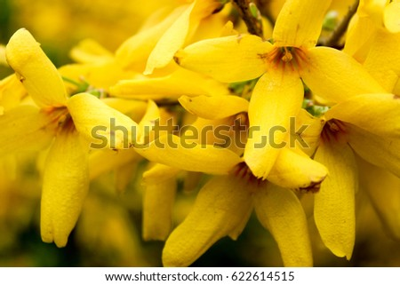 Free photos yellow flower with 4 petals avopix yellow flowers yellow flowers closeup flowers with four petals 622614515 mightylinksfo