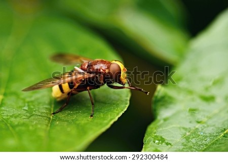 yellow fly #292300484