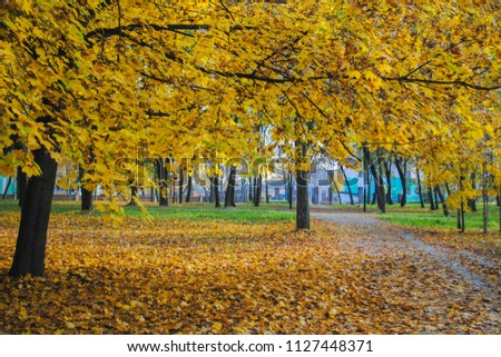 Yellow foliage in autumn in the park, the road is not in the center of the picture
