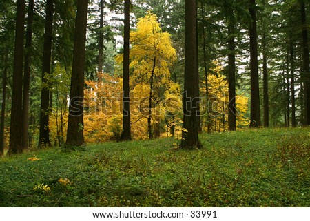 Yellow Forest Eruption