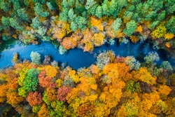 Yellow forest in autumn and blue river, view from above