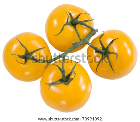 yellow fresh tomatoes with a green stick