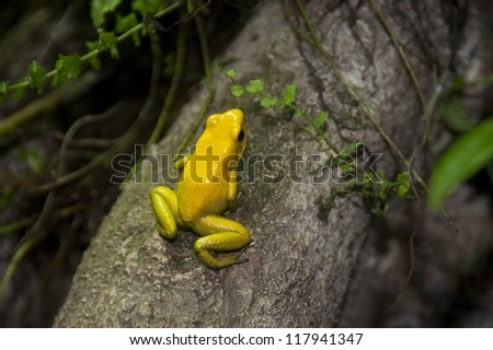 Stock Photo Yellow frog at the Butterfly Palace in Branson, Missouri