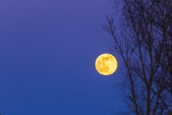 yellow fullmoon in the blue sky astronomy telephoto