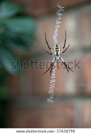 Yellow garden spider on web.