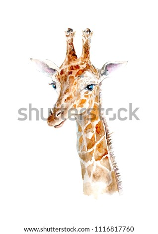 Yellow giraffe portrait.Watercolor hand drawn illustration.White background.African animals illustration.