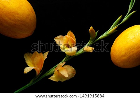 yellow gladiolus and yellow melons on black background