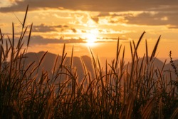 Yellow grass flower with beautiful sunrise over the mountain background