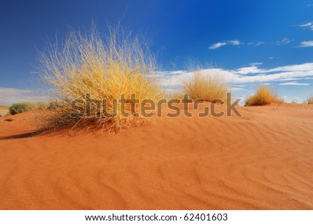 Yellow Grass in the Desert