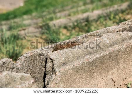 Yellow grass near the concrete border, summer bright day, green #1099222226