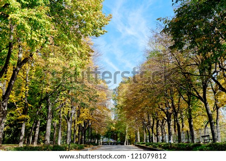 yellow green autumn trees and blue sky in Parco della Montagnola, Bologna, Italy