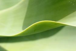 yellow green leaf macro, beautiful nature photo
