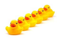 yellow gum ducks on white fund