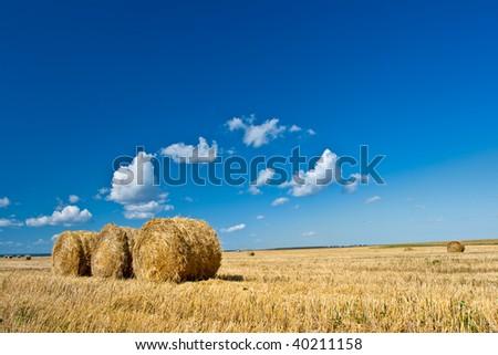 yellow hay on field under blue skies