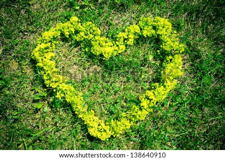 Yellow heart of a flower on the green grass
