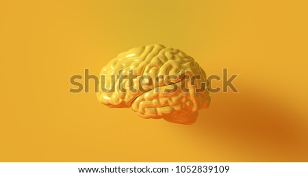 Yellow Human brain Anatomical Model 3d illustration 3d rendering