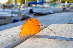 Yellow jagged leaf on wooden table on blurred background of yacht club