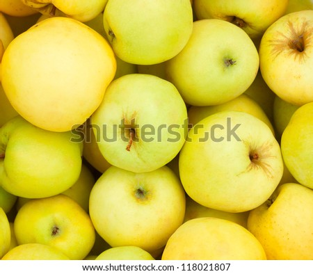 Yellow juicy fresh apples background. Close up.