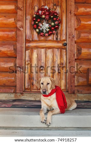 yellow lab sitting on cabin porch during holidays